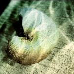 NautilusShell_Thumb
